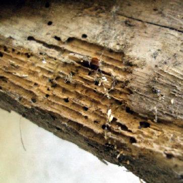 destacado-tratamiento-madera